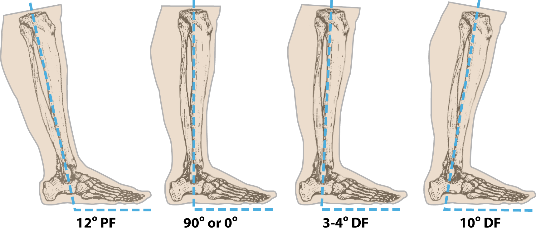 ankle-alignment-pf-df